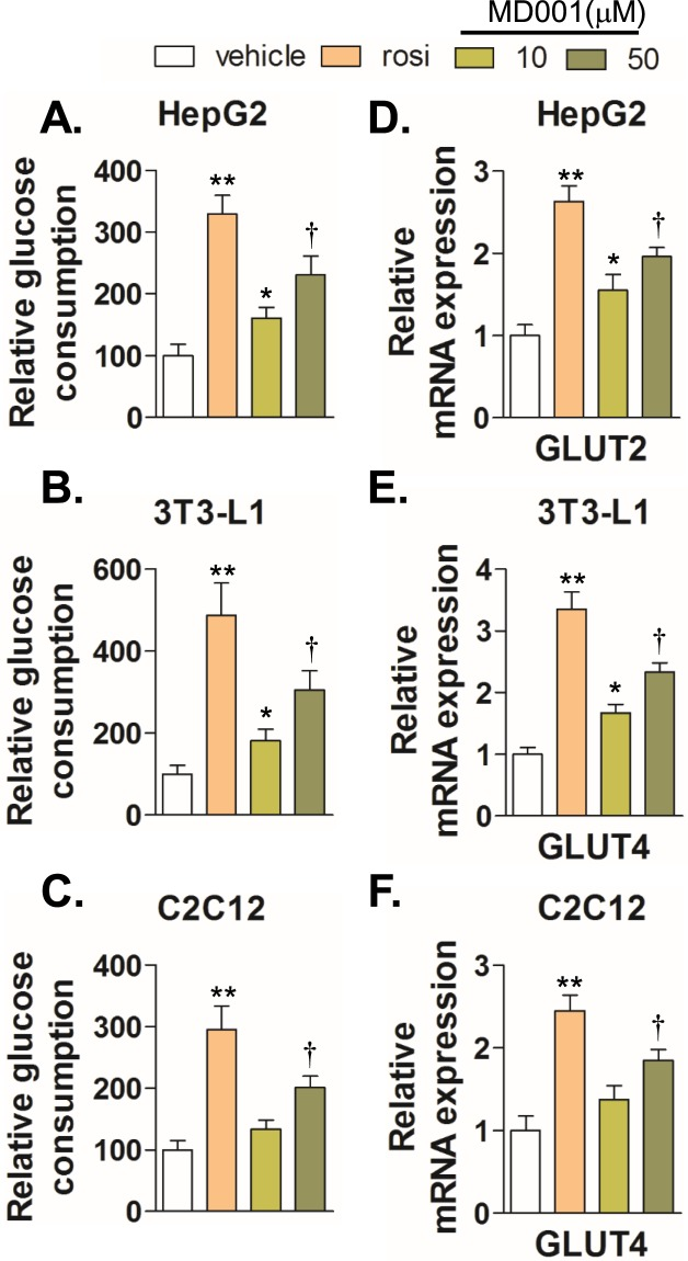 MD001 promotes glucose consumption by induction of GLUT expression. HepG2 ( A ), differentiated 3T3-L1 adipocytes ( B ), and differentiated C2C12 myotubes ( C ) were treated with vehicle, MD001 (10, 50 μM), or rosiglitazone (rosi, 10 μM) for 24 h; glucose consumption was examined as described in the Methods section. Cells were harvested for total RNA isolation. Relative expression levels of GLUT2 ( D ) and GLUT4 ( E , F ) were quantitated using qRT-PCR. *, **, and † vs. vehicle. Data represent the mean ± SD of three independent experiments. * P