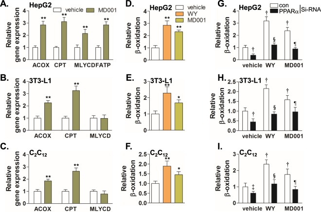 MD001 stimulates fatty acid oxidation in vitro . HepG2 ( A ), differentiated 3T3-L1 adipocyte ( B ), and differentiated C2C12 myotubes ( C ) were treated with vehicle or MD001 (10 μM) for 24 h and total <t>RNA</t> was isolated for <t>cDNA</t> synthesis. Relative gene expressions were analysed by qRT-PCR. HepG2 ( D ), differentiated 3T3-L1 adipocytes ( E ), and differentiated C2C12 myotubes ( F ) were treated with vehicle, MD001 (10 μM), or WY14643 (WY) (10 μM) for 24 h and the fatty acid oxidation rate was analysed as described in the Methods section. To confirm whether the fatty acid oxidation rate enhanced by MD001 is mediated by PPARα, HepG2 ( G ), differentiated 3T3-L1 ( H ), and differentiated C2C12 myotubes ( I ) were transfected with control or PPARα siRNA (20 nM) for 48 h, followed by treatment with vehicle, MD001 (10 μM), or WY14643 (WY) (10 μM) for 24 h. WY14643 was treated as positive control. *, **, vs. vehicle; † and ‡ , vs. vehicle/control siRNA; § , vs. WY/control siRNA; ¶ , vs. MD001/control siRNA. Data represent the mean ± SD of three independent experiments. * P
