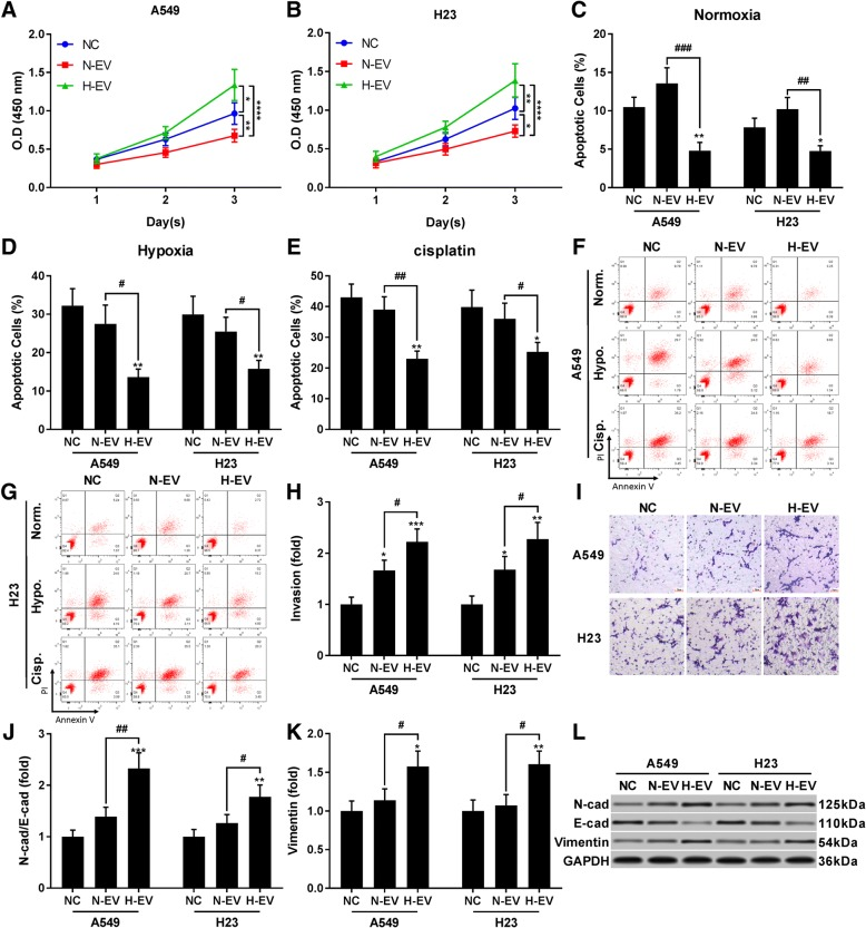 Extracellular vesicles (EV) secreted by hypoxia pre-challenged mesenchymal stem cells (MSCs) promote A549 and H23 cell proliferation, survival, mobility and EMT in vitro. Cells were pre-treated with EVs secreted by naïve (N-EV) or hypoxia pre-challenged (H-EV) MSCs. a and b , CCK-8 cell proliferations assay evaluating viable cell count at different timepoints. c – g , A549 and H23 cell apoptosis under normal, hypoxia challenge (1% O 2 ) or cisplatin challenge (5 μM) after N-EV or H-EV treatment. Hypoxia or cisplatin challenge was performed for 24 h before analysis. h – i , trans-well assay evaluating A549 and H23 cells invasion after N-EV or H-EV treatment. A549 or H23 cells treated with PBS vehicle were used as negative control (NC). Bar in I indicates 20 μm. j – l , western blot detecting epithelial and mesenchymal marker in A549 and H23 cells after treatment with N-EV or H-EV. Statistical analysis results by Student's t test was marked by # and that by Dunnett's test were marked by *. * or #, p