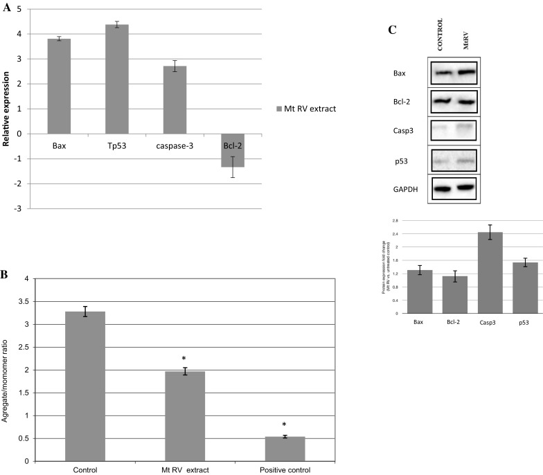 a Expression of genes Bax, Bcl - 2, Cas - 3 and TP53 in human grade IV glioma cells after treatment with 1.5 mg mL −1 Mt RV in vitro plant extract of Menyathes trifoliata . The transcript level of each gene was normalized to the expression of a reference gene ( <t>18S</t> <t>RNA</t> ). Data is presented as fold change in human grade IV glioma cells after treatment of Menyanthes trifoliata extract versus untreated human grade IV glioma cells, in which expression levels of the genes were set as 1. b Mitochondrial membrane potential in human grade IV glioma cells after treatment with 1.5 mg mL −1 Mt RV in vitro plant extract of Menyathes trifoliata . MMP is expressed as 530 nm/590 nm to 485 nm/538 nm (aggregates to monomer) fluorescence ratio, as quantified with a fluorescent plate reader after JC-1 staining). The mean values ± SD were calculated from three independent experiments. p