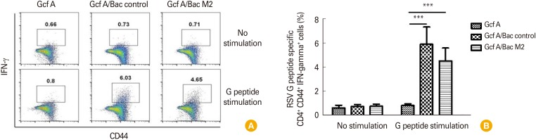 Identification of CD4 + Th1 interferon γ (IFN-γ) + cells specific for RSV G (183–195) peptide induced by vaccine inoculation. Lung mononuclear cells were isolated from mice vaccinated twice and sacrificed 5 days after RSV challenge. Isolated cells were stimulated with G peptide (183–195: WAICKRIPNKKPG) for 5 hours in vitro . Cells were stained with anti-CD3 antibody, anti-CD4 antibody, and anti-CD44 antibody and then fixed. Permeabilized cells were stained with anti-IFN-γ antibody and analyzed by flow cytometry. (A) The dot plots in the gated area represent CD4 + CD44 + T cells (Th1 cells) that can secrete IFN-γ. (B) The percentage of CD4 + CD44 + T cells (Th1 cells) that can secrete IFN-γ for each vaccine-immunized group. Data are expressed as mean±standard deviation (n=5/group). Statistically significant values are marked with an asterisk. *** p
