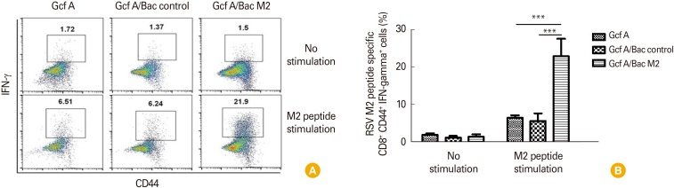 Comparison of CD8 + interferon γ (IFN-γ) + T cells specific for RSV M2 (82-90) peptide after vaccination. Mice were challenged with RSV after 2 vaccinations and lung mononuclear cells were harvested at day 5 to identify CD8 + CD44 + T cells capable of secreting IFN-γ. The harvested lung mononuclear cells were stimulated with M2 peptide (82-90: SYIGSINNI) for 5 hours in vitro . Stimulated lung cells were stained with anti-CD3, anti-CD8, and anti-CD44 antibodies and then fixed. Permeabilized cells were stained with anti-IFN-γ antibody and analyzed by flow cytometry. (A) The dot plots in the gated area represent the CD8 + CD44 + T cells that can secrete IFN-γ. (B) The percentage of CD8 + CD44 + T cells that can secrete IFN-γ for each vaccine-immunized group. Data are expressed as mean± standard deviation (n=5/group). Statistically significant values are marked with an asterisk. *** p