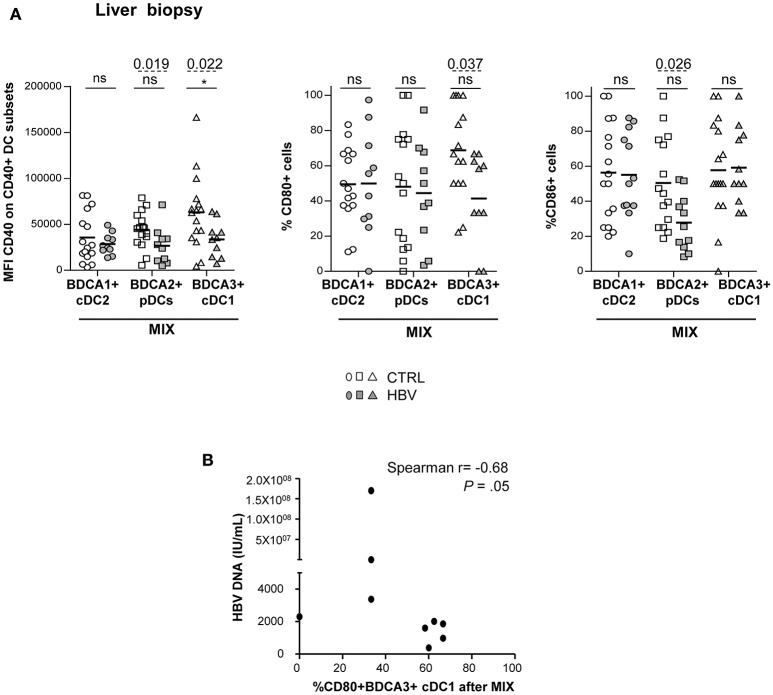 Altered maturation of intrahepatic BDCA2+ pDCs and BDCA3+ cDC1 in chronic HBV patients after TLRs stimulation. LMNC suspensions from non-viral infected controls or HBV patients were stimulated for 22 h with a mixture of TLRLs (MIX:polyI:C+R848+CPG A ) and the expression of the maturation markers CD40, CD80, and CD86 was measured by flow cytometry. (A) Percentages or MFI of CD40, CD80, and CD86 molecules on cDC2, pDCs, and cDC1. Open symbols, CTRL ( n = 15–16); filled symbols, HBV ( n = 10–12). P -values were calculated using the 2-way-RM ANOVA test (straight line, * P ≤ 0.05) and Mann–Whitney test (dashed lines). Bar indicated mean. (B) Spearman correlations between CD80 on intrahepatic cDC1 from HBV patients after MIX stimulation with HBV DNA ( n = 9).