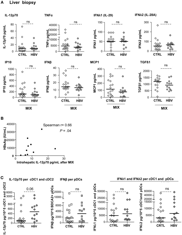Improvement of cytokine secretion by LMNCs in chronic HBV patients upon TLR triggering. LMNCs (1 × 10 6 cells/ml) from non-viral infected controls or HBV patients were stimulated for 22 h with a mixture of TLRL (MIX:polyI:C+R848+CPG A ) and the culture supernatants were examined for the presence of IL-12p70, IFNβ, IFNλ1, IFNλ2, TNFα, IP10, MCP1, IL-10, and TGF-ß1 by Luminex technology. (A) Quantification of cytokine secretion in the supernatants. Open symbols, HD ( n = 16); filled symbols, HBV ( n = 11–12). P -values were calculated using Mann–Whitney test. (B) Spearman correlation between the IL-12p70 secretion by intrahepatic LMNCs from HBV patients with plasmatic HBsAg levels ( n = 10). (C) Cytokine's secretion by liver cell suspensions were reported to the absolute number of DCs present in samples before stimulation with the mix of TLRLs (amount of cytokine/10 5 DC) as shown for cDC2+cDC1 (IL-12p70), pDCs (IFNβ) and cDC1+pDCs (IFNλ1, IFNλ2). Open symbols, HD ( n = 16–17); filled symbols, HBV ( n = 28–30). P -values were calculated using Mann–Whitney test. P -values were calculated using Man-Whitney test (dashed lines).