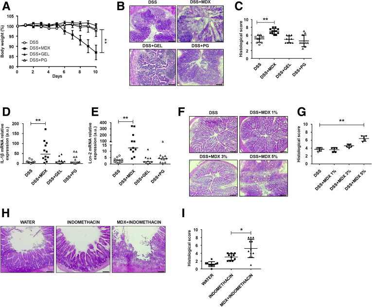 MDX-enriched diet exacerbates intestinal inflammation. ( A ) Wild-type mice were exposed to 5% MDX, 0.5% PG, or 5 g/L GEL, all diluted in drinking water, over a period of 45 days and challenged with DSS (1.75% in drinking water) starting from day 35 of diet. Body weight was recorded daily from day 35 until death (day 45). Data were generated using 10–12 mice per group from 3 independent experiments and expressed as means ± SEM. Differences among groups were compared using 1-way analysis of variance followed by the Bonferroni post hoc test. DSS vs DSS + MDX, ** P ≤ .01. ( B and C ) Representative H E staining and histologic score of colon sections taken from mice treated with DSS either alone or in combination with MDX, PG, or GEL, as indicated in panel A , and killed on day 45. Data were generated using 10–12 mice per group from 3 independent experiments and expressed as means ± SD. Differences among groups were compared using 1-way analysis of variance followed by the Bonferroni post hoc test. DSS vs DSS + MDX, ** P ≤ .01. ( B ) Scale bars : 100 μm. ( D and E ) IL1β and Lcn-2 RNA expression was assessed by real-time PCR in colonic tissues taken from mice treated as indicated in panel A and killed on day 45. Data were generated using 10–12 mice per group from 3 independent experiments. Each point in the graph indicates the RNA expression of the specific transcript in the colon of a single mouse; horizontal bars indicate median value. Differences among groups were compared using the Kruskal–Wallis test. DSS + MDX vs DSS, ** P ≤ .01. ( F and G ) Representative H E staining and histologic score of colon sections taken from mice treated with DSS either alone or in combination with increasing concentrations of MDX, as indicated in panel A , and killed on day 45. Data were generated using 5 mice per group from 2 independent experiments and expressed as means ± SD. Differences among groups were compared using 1-way analysis of variance followed by the Bonferroni post hoc t