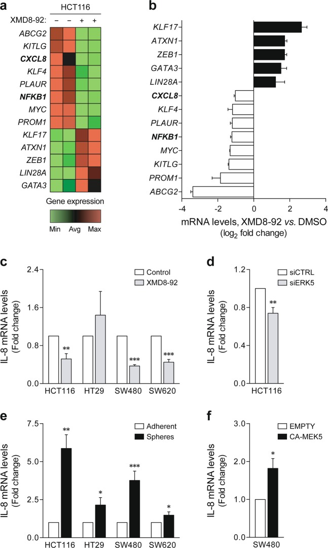 ERK5-mediated signaling regulates IL-8 expression. a , b Gene expression profiling was performed in HCT116 tumorspheres using the Human Cancer Stem Cells RT 2 Profiler PCR Array. a Heatmap representation of differentially expressed genes between vehicle- and XMD8-92-treated tumorspheres (green: downregulation; red: upregulation). b PCR array results are expressed as mean ± SD log 2 -transformed fold change to vehicle control-treated spheres. c The effect of ERK5 inhibition on IL-8 expression was validated by independent qRT-PCR in HCT116, HT29, SW480, and SW620 tumorspheres treated with XMD8-92 versus vehicle control, and d ERK5 small interfering RNA (siRNA) versus control siRNA HCT116 tumorspheres. e IL-8 mRNA levels were further measured in tumorspheres versus adherent cultures, and f CA-MEK5-overexpressing versus empty vector SW480 cells. Results are expressed as mean ± standard error of mean from at least three independent experiments. * p