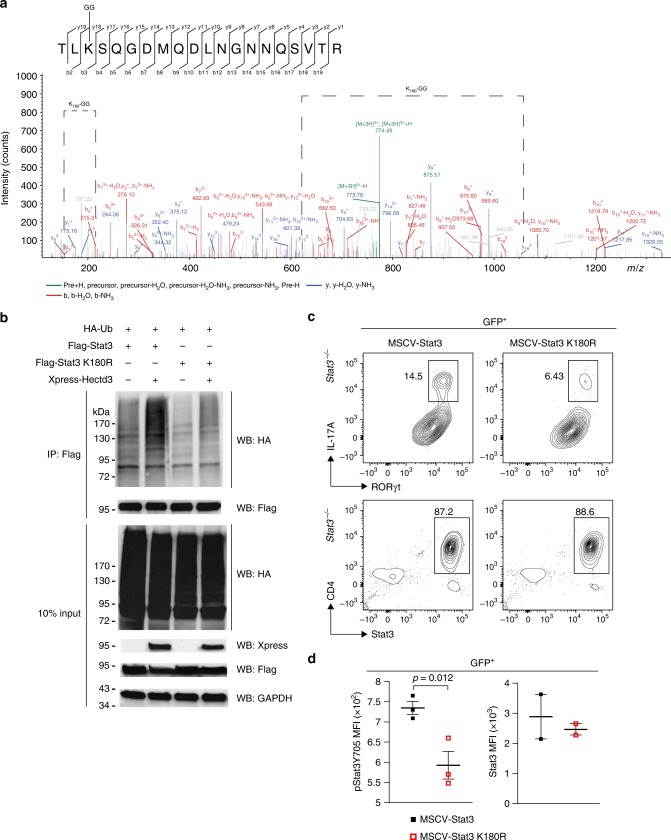 Ubiquitination of Stat3 at K180 by Hectd3 is essential for RORγt + IL-17A hi Th17 cell generation. a HEK293T cells were co-transfected with HA-Ub, Flag-Stat3, and Xpress-Hectd3. Extracts were immunoprecipitated with anti-Flag antibodies, followed by trypsin digestion and tandem mass spectrometry, as described in Material and methods. A fragmentation spectrum of ubiquitinated TLkSQGDMQDLNGNNQSVTR peptide (ubiquitinated K180 residue) of Stat3. Parent ion corresponding to TLkSQGDMQDLNGNNQSVTR peptide mass (774.0342, z = +3, retention time t = 38.1356 min) has been subjected to higher-energy collisional dissociation in mass spectrometer. The detected b- and y-fragment ion series have been annotated and mass difference corresponding to GG tag (114.04293 Da) has been assigned to a K3 residue as indicated (K180-GG) by the difference between the y17 and y18 fragment ion masses. b Representative immunoblot of HA, Flag, Xpress, and GAPDH following Flag immunoprecipitation of protein extracts from HEK293T cells co-transfected as indicated with HA-Ub, Flag-Stat3, Flag-Stat3 K180R, and Xpress-Hectd3; data are representative of three independent experiments. c Flow cytometry analysis of intracellular IL-17A, and intranuclear RORγt and Stat3 in GFP + Stat3 −/− CD4 + T cells transduced with MSCV-Stat3 or MSCV-Stat3 K180R retroviruses and in vitro polarized under Th17 conditions. Representative of three independent experiments. Gating strategy was first on GFP + T cells. d MFI of pStat3 Y705 and Stat3 in GFP + Stat3 −/− CD4 + T cells transduced with indicated retroviruses normalized to those transduced with MSCV empty vector and in vitro polarized under Th17 conditions. Data ( n = 6) are mean of three (pStat3 Y705) and two (Stat3) independent experiments and are presented as mean ± SEM; p value was obtained from Student's t test. Source data are provided as a Source Data file