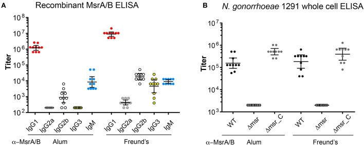 Immunogenicity of MsrA/B. The titers of the post-immune sera from each mouse immunized with either MsrA/B- Alum or MsrA/B-Freund's were determined by ELISA against (A) purified recombinant MsrA/B for IgG1, G2a, G2b, G3, IgM, or (B) whole cell N. <t>gonorrhoeae</t> 1291 wild type (WT), msr::kan mutant (Δmsr), and complemented (Δmsr_C) strains for IgG. The titer for each of 10 mice are shown with circles, and the geometric mean titer (GMT) and 95% Confidence interval are indicated bars. The titers of pre-immune sera against whole cell N. gonorrhoeae 1291 strains were ≤ 200.