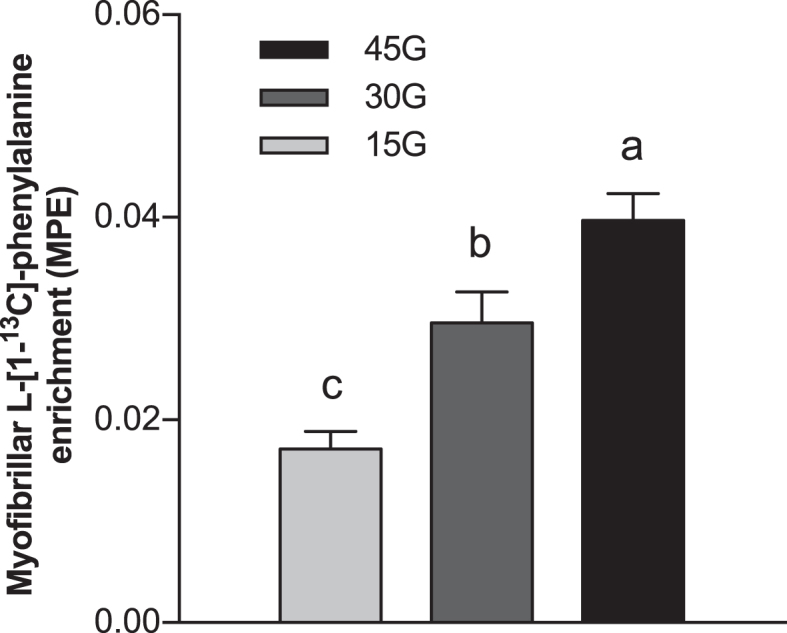 l -[1- 13 C]-phenylalanine incorporation into myofibrillar protein after ingestion of 15G, 30G, or 45G after resistance exercise in older men. Values represent means ± SEMs,  n  = 12. Data were analyzed with a 1-factor ANOVA. Tukey post hoc testing was used to detect differences between groups. Labeled means without a common letter differ ( P