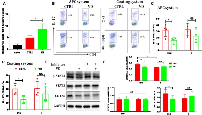 VD restrained Th17 cells differentiation through miR-124 mediated inhibition of IL-6 signaling. CD4 + CD62L + cells from C57BL/6J were cultured in the Th17-polarizing conditions with immobilized anti-CD3 and soluble anti-CD28 with or without VD. In some experiments, naïve CD4 + T cells were transduced with 10 nM miR-124 inhibitor for 24 h using Lipofectamine® 3000 before polarized into Th17 cells. (A) qRT-PCR showed that VD upregulates miR-124 expression in Th17 cells (72 h). (B–D) naïve CD4 + T cells were transduced with miR-124 inhibitor (i) or inhibitor control (iNC) before Th17-polarization using immobilized anti-CD3 or APCs system and flow cytometry was used to confirm IL-17 expression at protein level. Data are presented as the mean ± SEM ( n = 4). (E,F) naïve CD4 + T cells were transduced with miR-124 inhibitor (+) or inhibitor control (–) before Th17-polarization using immobilized anti-CD3. CD126 expression and (p)-STAT3 activity were checked by western blots. Data are presented as the mean ± SEM. NS means no significance, * P