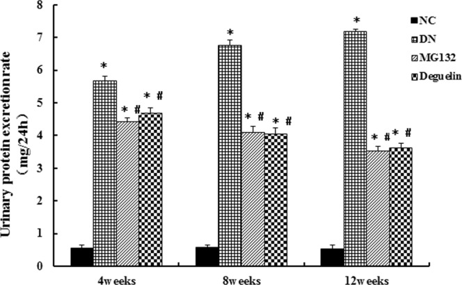 Effect of MG132 on the urinary protein excretion rate in DN rats. In DN rats, both MG132 and deguelin treatment effectively reduced urinary protein excretion for the indicted time. NC: normal control group; DN: diabetic nephropathy group; MG132: diabetic nephropathy plus MG132 treatment group; Deguelin: diabetic nephropathy plus deguelin treatment group. Means ± SEM; N = 6; * P