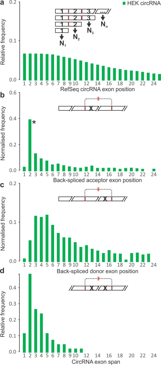 Exonic features at human HEK 293 cell circRNA-producing gene loci. ( a ) Relative frequencies of exons by ordinal position N along circRNA-producing genes. Frequency of back-splice ( b ) acceptor and ( c ) donor exon at each position after normalisation to exon frequency as shown in ( a ). *CircRNA acceptor exons were over-represented in the second position of circRNA-producing genes compared to other exon positions (P-value