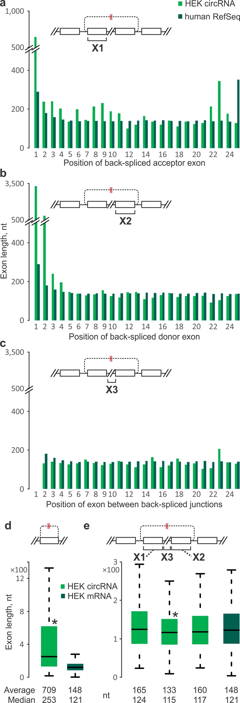 Exon lengths at human HEK 293 cell circRNA loci. Exons from circRNA-producing genes (green) are compared to RefSeq ( a – c ) or HEK-specific RefSeq ( d , e ) averages in the corresponding linear ordinal positions (dark green). ( a ) Average acceptor exon lengths. ( b ) Same as ( a ), but for donor exons. ( c ) Same as ( a ), but for circRNA-internal exons. ( d ) Single-exon circRNAs (green) compared to the internal exon lengths of HEK-specific RefSeq mRNAs (dark green). ( e ) Same as ( d ), but for acceptor (X1), donor (X2) and internal (X3) exons of multi-exon circRNAs. ( d , e ) Asterisks denote significantly different exon lengths between the circRNA-producing genes and HEK-specific RefSeq mRNAs (P-values
