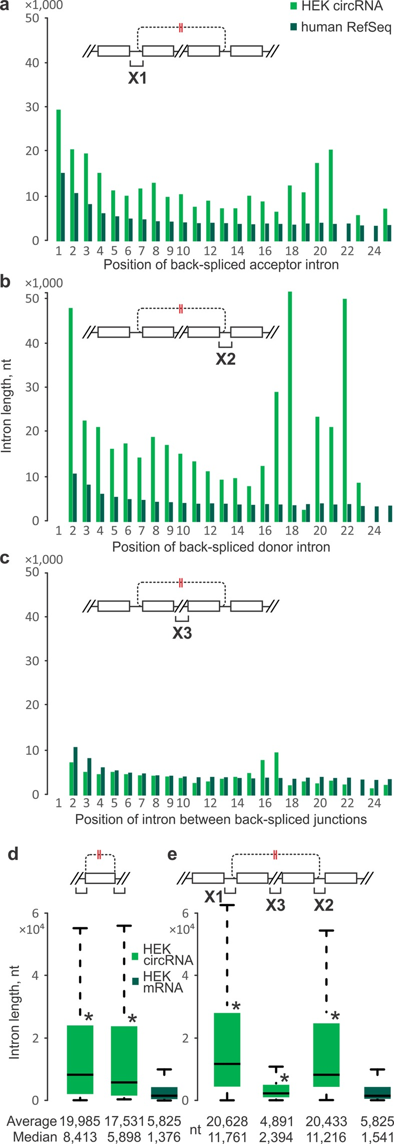 Intron lengths at human HEK 293 cell circRNA loci. Introns from circRNA-producing genes (green) are compared to RefSeq averages in the corresponding linear ordinal positions (dark green). ( a ) Average intron lengths at the upstream flank of back-spliced acceptor exons. ( b ) Same as ( a ), but for introns at the downstream flank of back-spliced donor exons. ( a , b ) Acceptor and donor introns of circRNA-producing genes are much longer than RefSeq genes in same ordinal positions and overall lengths of acceptor and donor introns were significantly longer than introns of RefSeq genes (measured by P-value