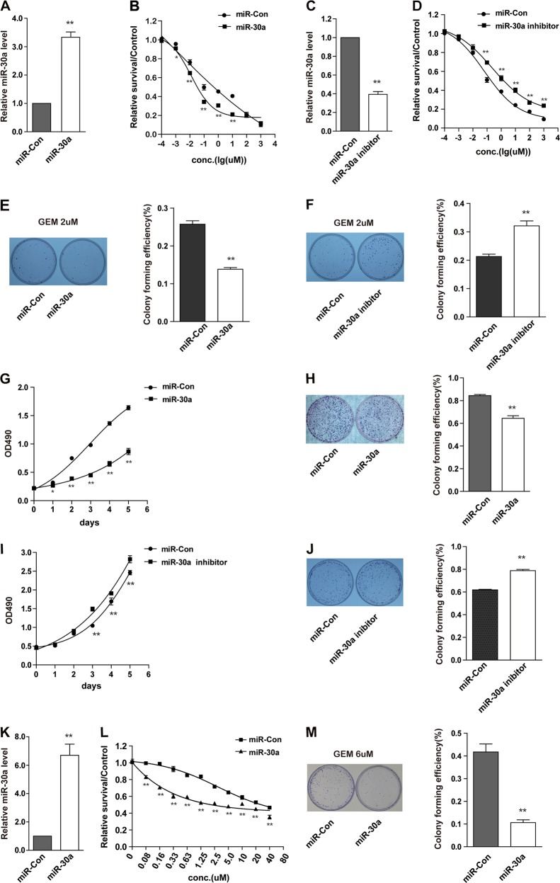 MiR-30a suppresses cell proliferation and enhances cell sensitivity to gemcitabine. a , b SW1990 cells were transfected with miR-30a precursor (miR-30a) or scramble control lentivirus (miR-Con). MiR-30a level was confirmed by qRT-PCR ( a ). Gemcitabine sensitivity was determined by MTS assays ( b ). * P