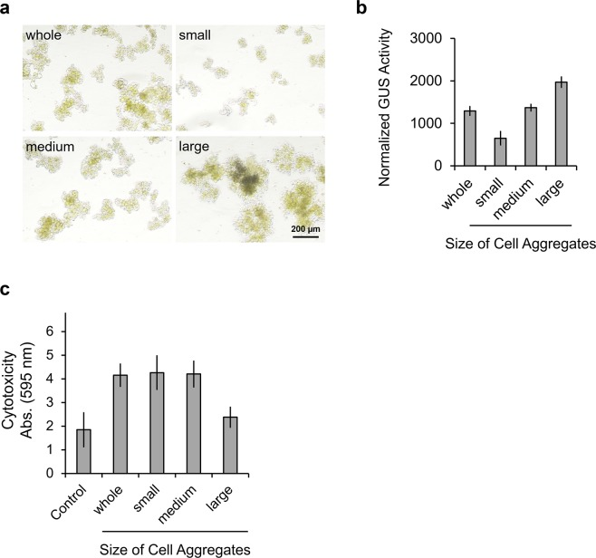 Effect of cell aggregation on <t>electroporation</t> efficiency. ( a ) Images of fractionated T87-xGxGUS cells. T87-xGxGUS cell aggregates were fractionated into small (