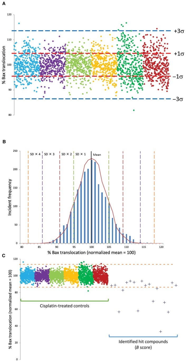 Intra‐ and inter‐plate variability of 384‐well assay for automated enhanced green fluorescent protein (EGFP)‐Bax translocation and identification of small molecule inhibitors of Bax translocation. Assay variability was assessed by examining cisplatin‐induced EGFP‐Bax translocation in six 384‐well plates (2304 wells) following cisplatin treatment. For each well, n ≥ 250 cells were examined. (A) Data points represent the level of observed EGFP‐Bax translocation as determined in single wells. Data collected from each plate are represented by different colours normalized to 100% mean. Red and blue and dotted lines represent mean ± 1 and 3 SDs, respectively. (B) Frequency distribution of control data presented in (A) demonstrating normalized distribution data. For control cisplatin data, 99.78% of values fall within 3σ of the normalized mean. Dotted lines represent successive ±SDs away from the normalized mean. Graph line represents idealized normal distribution for this dataset. (C) High‐throughput screening of four chemical libraries (6246 GRAS compounds) identified eight targets who response differed by > 3σ from the cisplatin controls dataset. These were selected for secondary screening together with 10 compounds whose B score suggested them as possible hits in comparison to controls. Control data from (A) are shown for reference. For each well, n ≥ 250 cells were examined. Blue dotted lines represent the mean ± 3 SD
