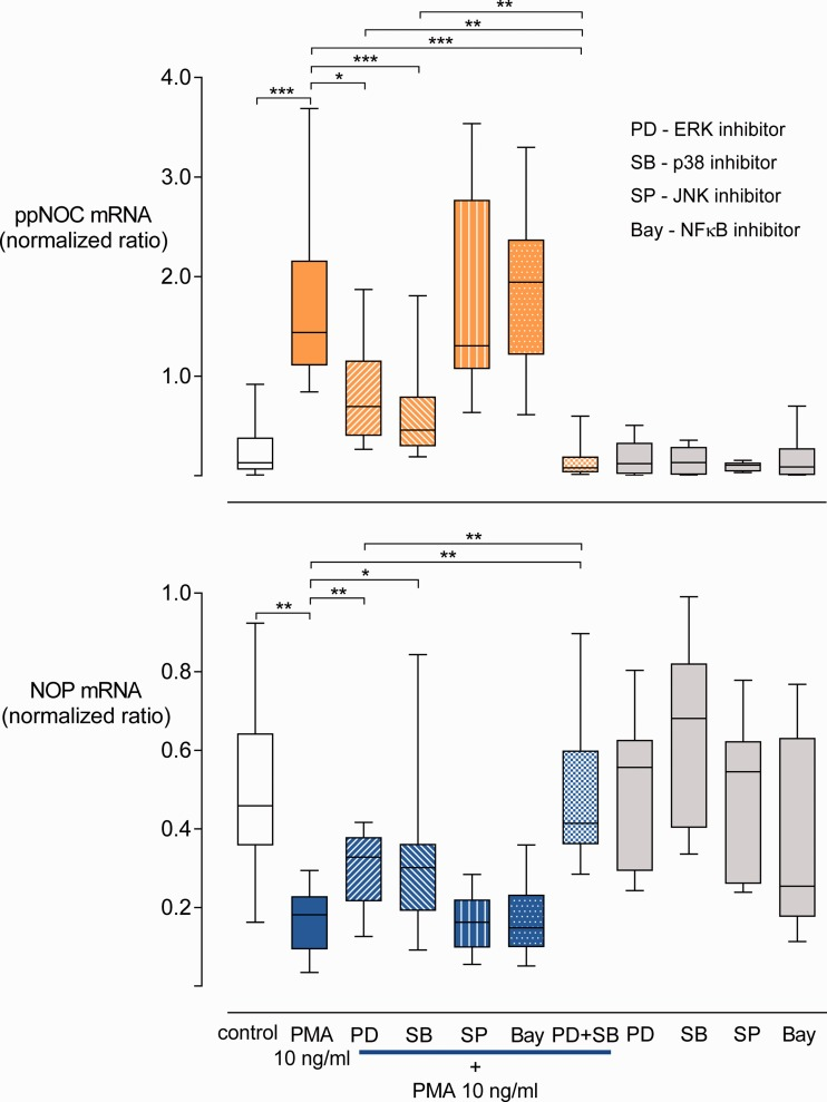 Influence of kinase inhibitors on ppNOC and NOP mRNA expression. ppNOC and NOP expression in blood leukocytes cultured with PMA or without (control) and with or without pre-treatment with the specific kinase inhibitors PD98059 (PD, ERK inhibitor) 30 μM, SB203580 (SB, p38 inhibitor) 10 μM, SP600125 (SP, JNK inhibitor) 10 μM, Bay 11-7821 (Bay, NFκB inhibitor) 3 μM, or the combination of PD and SB. Box-and-whisker plots, medians with interquartile ranges, and 5 to 95 percentiles, n =10 for the PD+SB+PMA group, n =17 for all other groups. * P