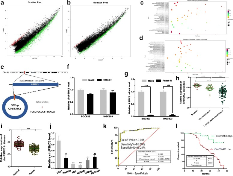 "CircPSMC3 expression is down regulated in clinical GC specimens and cell lines. a Scatter plot analyses of circRNAs microarray data showing differentially expressed circRNA in lymph node metastasis group and normal group . High expression level is indicated by ""red"" and low levels by ""green"". b Scatter plot analyses of circRNA microarray data showing differentially expressed circRNAs in lymph node metastasis group and no lymph node metastasis group. c GO analysis of circRNAs in lymph node metastasis group and normal group. d GO analysis of circRNAs in lymph node metastasis group and no lymph node metastasis group. e The spliced mature sequence length of circPSMC3 derived from the PSMC3 gene is 502 bp. f QRT-PCR for the abundance of circPSMC3 in GC cells treated with RNase R. g QRT-PCR for the abundance of PSMC3 mRNA in GC cells treated with RNase R. h CircPSMC3 expressions were evaluated using qRT-PCR in 106 pairs of gastric cancer plasmas and 21 pairs of normal plasmas. i CircPSMC3 expressions were measured using qRT-PCR in 106 pairs of gastric cancer (Tumor) and matched noncancerous tissue (Normal). j The expressions of circPSMC3 were evaluated in cell lines using qRT-PCR. k The area under the ROC curve (AUC) in distinguishing GC plasmas and normal ones was 0.9326. l Kaplan Meier survival curve showed the relationship between circPSMC3 and survival rates. ** p"