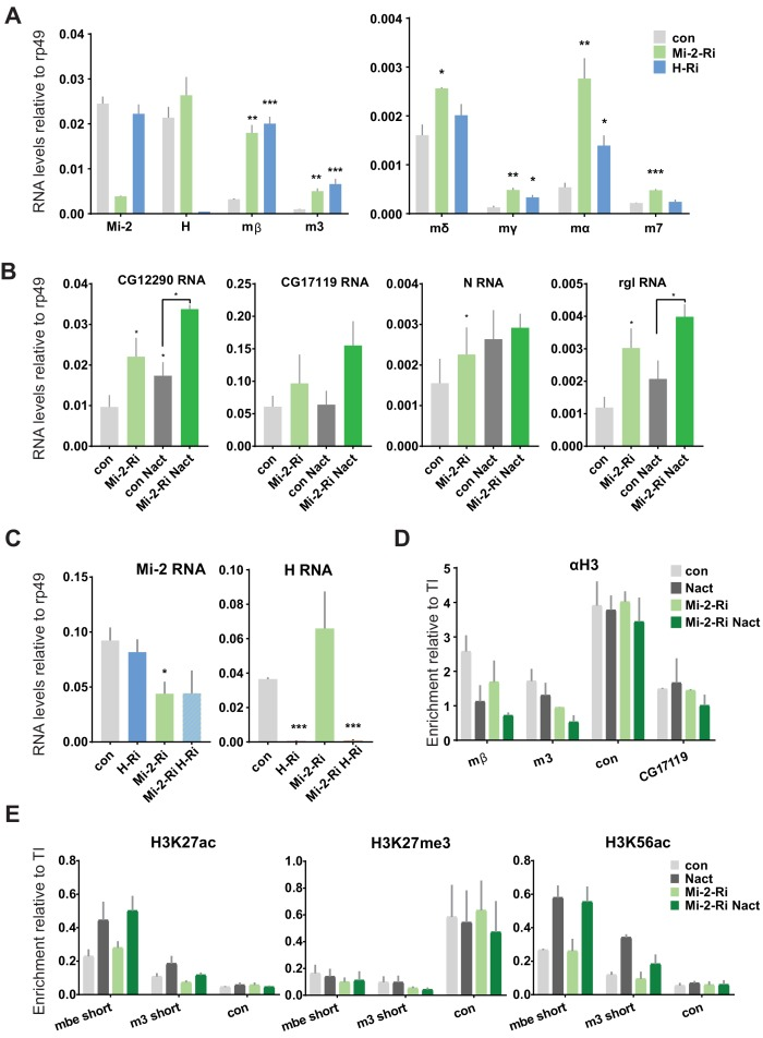 Effects of <t>Mi-2</t> depletion on histone modifications at the E(spl)-C locus. ( A ) Fold change in RNA levels in Kc cells upon knockdown of Mi-2 or Hairless compared to control conditions (con: GFP RNAi). Mi-2 or Hairless knock down was performed for 3 days prior to the experiment. Note that Mi-2 and H are both downregulated indicating that the knockdown strategy was successful and E(spl)mδ, E(spl)mγ, E(spl)mα and E(spl)m7 are all significantly de-repressed in Notch-off state. ( B ) Fold change in RNA levels in Kc cells upon knockdown of Mi-2 compared to control conditions (con: GFP RNAi) and to cells with Notch activation (Nact). Note that other Notch regulated genes such as CG12290 , CG17119, Notch and regular (rgl) are de-repressed in Notch-off state and have enhanced expression in Notch-on state ( C ) Fold change in RNA levels in Kc cells upon combined knockdown of Mi-2 and Hairless compared to control conditions and single knockdown of Mi-2 or Hairless . Note that Mi-2 and H are downregulated in both single and double conditions indicating that the knockdown strategy was successful. ( D ) Enrichment of Histone H3 is indicated at E(spl)-C or regions in Kc cells as revealed by ChIP in control (grey) or Mi-2 knockdown (for 3 days, green) conditions in Notch-off (light shading) and Notch-on (EGTA treatment 30 min; dark shading). H3 distribution in Notch active and in control conditions is not altered by knockdown of Mi-2 . ( E ) Enrichment for various histone modifications such as H3K27acetylation, H3K27trimethylation and H3K56acetylation is indicated at E(spl)-C locus in Kc cells as revealed by ChIP in control (grey) or Mi-2 knockdown (for 3 days, green) conditions in Notch-off (light shading) and Notch-on (EGTA treatment 30 min; dark shading). No change in the levels of these modifications was detected following knockdown of Mi-2 . (p values: *0.01