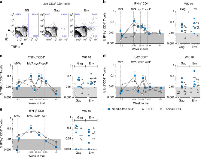 Needle-free SL/B immunization generates vaccine-specific <t>CD4</t> and CD8 T cells in the blood. PMBCs were stimulated with HIV-1 consensus B Gag and Env peptides and analyzed by flow cytometry for cytokine production. a Representative flow plots for IFN-γ and TNF-α cytokine expression on Live CD3 + CD4 + cells in non-stimulated (NS), Gag, or Env stimulated PBMCs is shown. Kinetics of the total (Gag + Env) b IFN-γ, c TNF-α, and d IL-2 response in CD4 + T cells (mean ± S.D.), with the peak response (wk 16) highlighted for each animal (line denotes mean). e Kinetics of the total IFN-γ response in CD8 + cells (mean ± S.D.), with the peak response (wk 16) highlighted for each animal. White circle, topical SL/B ( n = 4); blue square, needle-free SL/B ( n = 5); gray triangle, ID/SC ( n = 6)