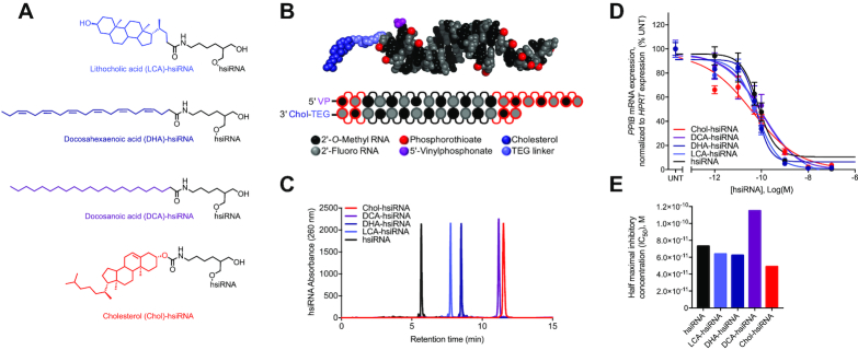 Synthesis and biophysical characterization of lipid-hsiRNA conjugates. ( A ) Chemical structures of lipid-hsiRNA conjugates. ( B ) Modification pattern and molecular model of lipid-hsiRNAs. ( C ) HPLC traces of lipid-hsiRNAs following reverse phase column chromatography. ( D ) HeLa cells were incubated with PPIB -targeting hsiRNAs at concentrations shown for 72 h. PPIB mRNA levels were measured using QuantiGene (Affymetrix), normalized to housekeeping HPRT1 (hypoxanthine phosphoribosyltransferase 1) mRNA levels, and presented as percent of untreated control ( n = 3, mean ± SD). UNT – untreated cells. ( E ) Plotted IC 50 values determined from the best-fit curves in (D).