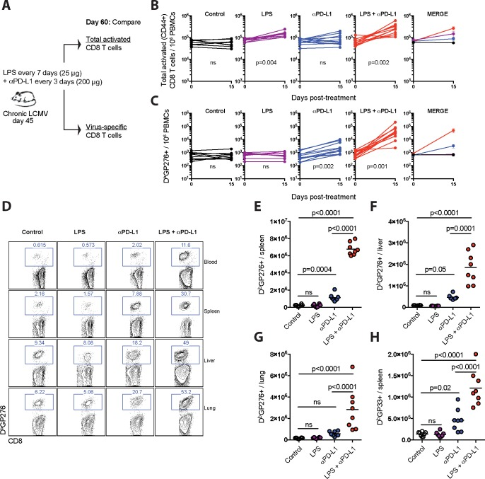 Effects of LPS on CD8 T cells in chronically infected mice. ( A ) Experimental outline for evaluating the effect of LPS on total activated CD8 T cells or virus-specific CD8 T cells during a chronic viral infection. Mice chronically infected with LCMV Cl-13 received PD-L1 blocking antibodies combined with LPS. ( B ) Summary of total activated CD8 T cells in blood. ( C ) Summary of virus-specific CD8 T cells in blood. ( D ) Representative FACS plots showing the frequencies of virus-specific (D b GP276+) CD8 T cells in blood and tissues. ( E ) Summary of virus-specific (D b GP276+) CD8 T cells in spleen. ( F ) Summary of virus-specific (D b GP276+) CD8 T cells in liver. ( G ) Summary of virus-specific (D b GP276+) CD8 T cells in lung. ( H ) Summary of virus-specific (D b GP33+) CD8 T cells in spleen. Data are pooled from different experiments; PBMC data are from experiments that were performed 3 times, n = 3–5 mice per experiment; Tissue data are from experiments that were performed 2 times, n = 3–5 mice per experiment; ns, not significant. Indicated p-values for panels B-C compare pre- and post-treatment values for each group using Wilcoxon matched-pairs signed rank test. All other data were analyzed using ANOVA for multiple comparisons with Holm-Sidak's correction. Error bars represent SEM.
