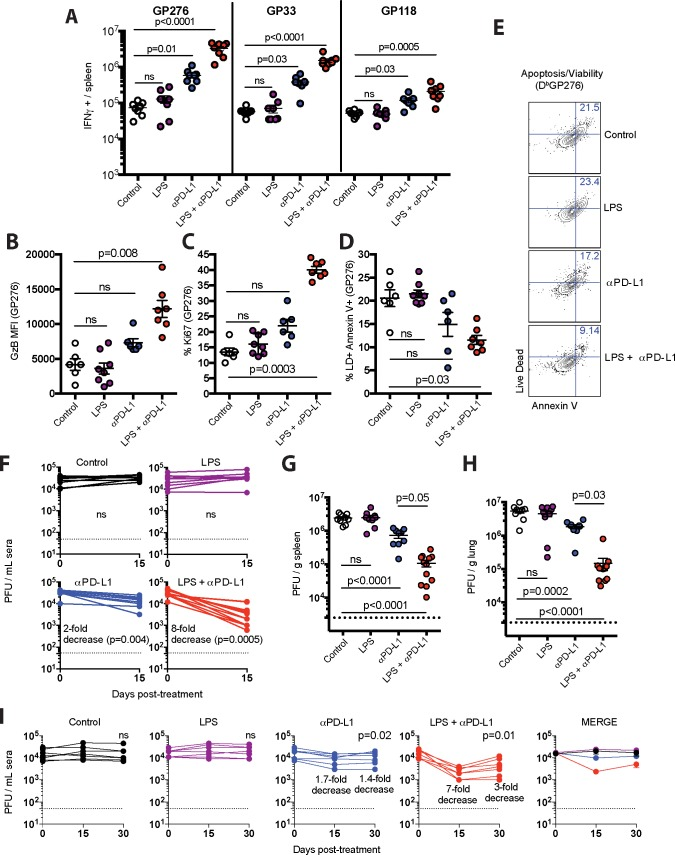Potent synergism between LPS and PD-1 therapy. ( A ) Absolute numbers of virus-specific CD8 T cells in spleen producing IFN-γ after 5-hr stimulation with LCMV peptides (0.1 μg/mL) in the presence of brefeldin A and monensin at 37°C in 5% CO 2. B) Granzyme B expression in virus-specific (D b GP276+) CD8 T cells from spleen. ( C ) Ki67 expression in virus-specific CD8 T cells from spleen. ( D ) Apoptotic (Annexin+ Live/Dead+) virus-specific CD8 T cells in spleen. ( E ) Representative FACS plots depicting apoptotic virus-specific CD8 T cells in spleen. ( F ) Summary of viral control in sera. Fold-change is calculated by dividing the pre-treatment levels by the post-treatment levels. ( G ) Summary of viral control in spleen (day 15 post-treatment). ( H ) Summary of viral control in lung (day 15 post-treatment). ( I ) Summary of long-term viral control in sera. Virologic control is maintained long-term, but complete viral elimination is not observed. Experimental layout was similar as the one depicted in Fig 1A . For all plaque assays the limit of detection is indicated by a dashed line. Data are pooled from different experiments. Experiments were performed twice, n = 3–5 mice per experiment, except for panel F that included 3 experiments, n = 3–5 mice per experiment; ns, not significant. Statistical analyses for panel A were performed with Kruskal-Wallis test with Dunn's multiple comparison test; for panels B-D and G-H ANOVA for multiple comparisons with Holm-Sidak's correction was used; for panels F and I, Wilcoxon matched-pairs signed rank test was used comparing pre-treatment viremia versus day 30 viremia within the same treatment group. Error bars represent SEM.