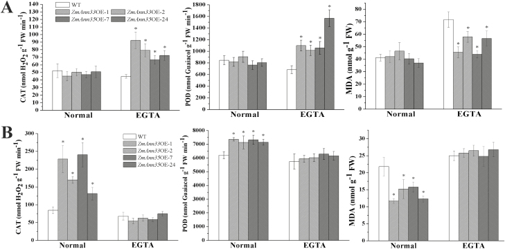 The antioxidant enzyme activities and MDA contents in <t>transgenic</t> seedlings. The typical antioxidant enzymes activities (CAT, SOD) and MDA contents were examined. (A) Physiological activity of <t>Arabidopsis</t> seedlings under different treatments after 3 d chilling stress. (B) Physiological activity of Arabidopsis seedlings under different treatments after 2 d recovery period from chilling stress. *Significant difference from WT at α=0.05, LSD test.