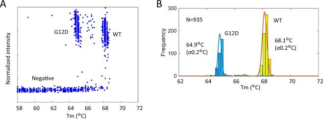 Genotyping of KRAS mutation with a 2-plex assay. ( A ) The relationship between Tm and the normalized intensity of each well. The groups ('negative' wells, wells containing WT DNA, and wells containing G12D mutant DNA) were divided by Tm and normalized intensity. ( B ) Tm histogram of 'positive' wells.