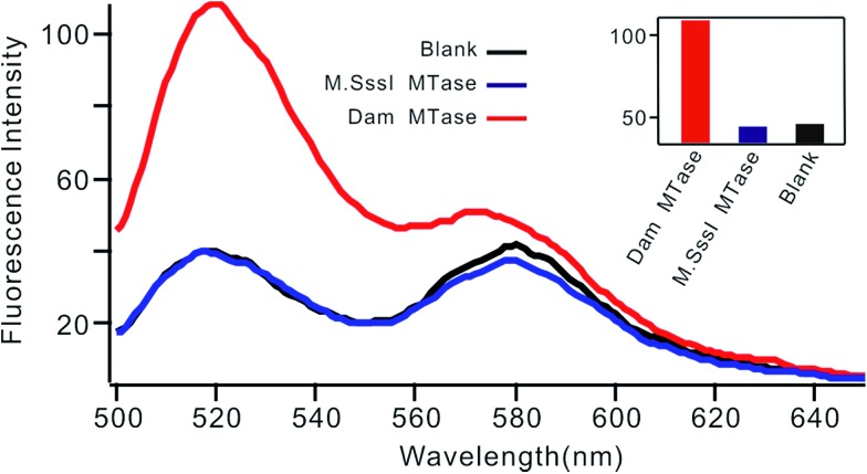 Fluorescent spectrum in response to 0.01 U mL –1 Dam MTase and 0.1 U mL –1 M.SssI MTase. The insert shows the fluorescence intensity at 520 nm according to the spectrum.