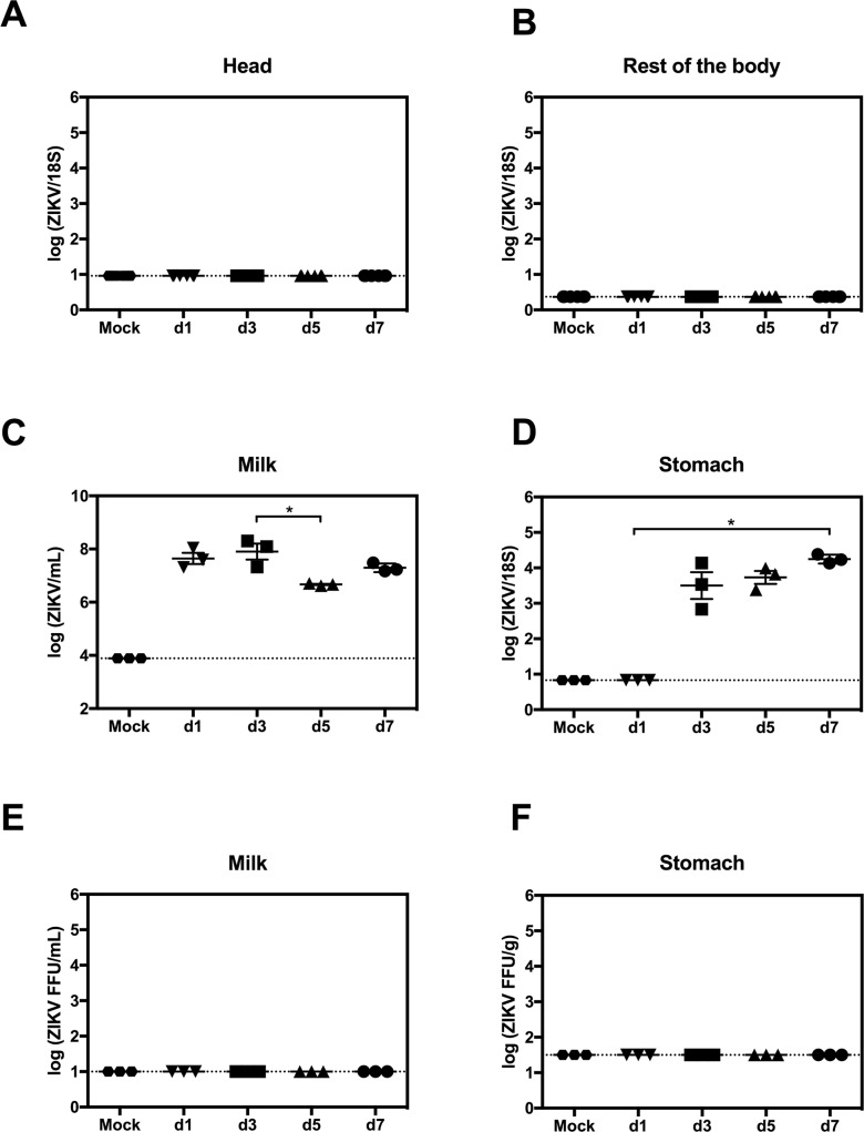 Transmission of ZIKV RNA in mouse breast milk. Postpartum AG129 dams were retro-orbitally inoculated with 1 x 10 2 FFU of ZIKV FSS13025 or 10% FBS-PBS as Mock within 24 hours of parturition. Pups were sacrificed on d1, d3, d5 and d7 after birth. (A and B) Levels of ZIKV RNA in the head and the rest of the body were measured by qRT-PCR (n = 6 mice, each day). (C and D) ZIKV RNA levels in stomach milk clots (SMC) and stomach tissues were quantified via qRT-PCR (n = 3 mice, each day). (E and F) Presence of infectious ZIKV in SMC and stomach was assessed using FFA (n = 3 mice, each day). Data represent two independent experiments.