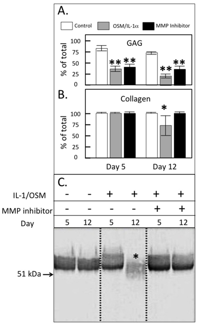 Glycosaminoglycan (GAG; A ) and collagen content ( B ) of ovine articular cartilage explants after 5 or 12 days of culture in Dulbecco's Modified Eagles Medium (DMEM) without (control) or with 5 ng/mL IL-1 and 50 ng/mL oncostatin M (IL-1/OSM) ± 300 nM MMP-inhibitor PGE3162689 (expressed as % of the total in explant plus media; mean ± standard deviation) ( n = 6). Significant differences between control and treated cultures were defined as * p
