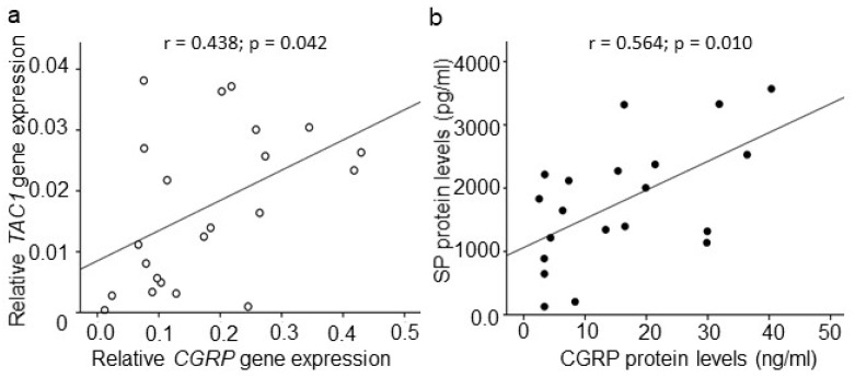 Correlations among <t>CGRP</t> and SP expression in DDD patients. ( a ) Correlation among TAC1 and CGRP gene expression ( r = 0.438; p = 0.042; n = 22; Spearman correlation co-efficient) and, ( b ) Correlation among CGRP and SP ( r = 0.564; p = 0.010; n = 20; Spearman correlation co-efficient) in IVD tissues.