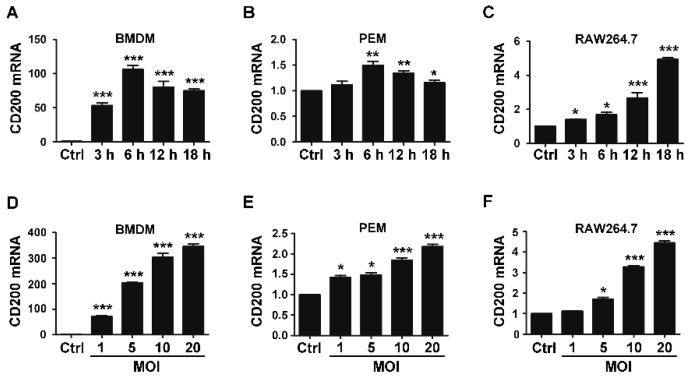 S. aureus infection induces CD200 expression in murine macrophages. Mouse BMDMs ( A , D ), PEMs ( B , E ), or RAW264.7 cells ( C , F ) were challenged with S. aureus (MOI = 1) for the indicated time periods (0–18 h), or with S. aureus at the indicated MOIs (0–20) for 6 h. Cells were then collected and detected for CD200 mRNA level by qPCR. Results are expressed as the mean ± SD of three independent experiments; * p