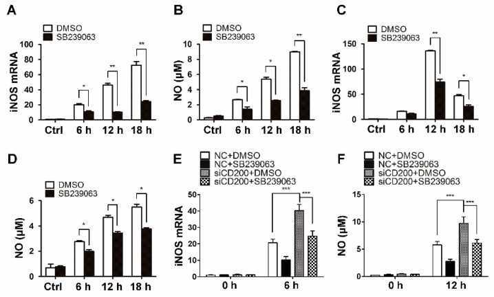The p38 inhibition largely abolished the effects of CD200 on NO synthesis induced by staphylococcal infection. ( A – D ) Mouse PEMs ( A , B ) or BMDMs ( C , D ) were pre-treated with SB239063 (10 μM, 0.5 h) or vehicle (DMSO), and then treated with S. aureus for indicated time periods (0–18 h). The mRNA level of iNOS was detected by qPCR, and the concentration of NO in culture supernatants was determined using Griess reagent. ( E , F ) Mouse PEMs were transfected with CD200 siRNA or NC for 48 h and treated with SB239063 or vehicle (DMSO) for 0.5 h. Cells were then infected with S. aureus for indicated time periods (0–12 h). The mRNA level of iNOS and the concentration of NO in culture supernatants were analyzed. Results are expressed as the mean ± SD of three independent experiments; * p