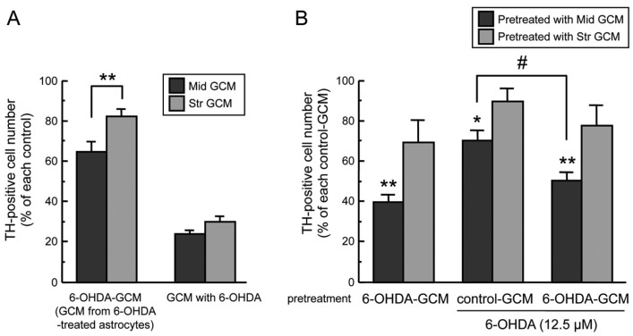 ( A ) Regional difference of glia conditioned media (GCM). Cell viability of TH-positive dopaminergic neurons co-incubated with mesencephalic or striatal GCM (control-GCM, 6-OHDA-GCM, GCM with 6-OHDA (100 µM) for 24 h. Each value is mean ± SEM ( n = 4) expressed as percentage of each control-GCM group; ** p