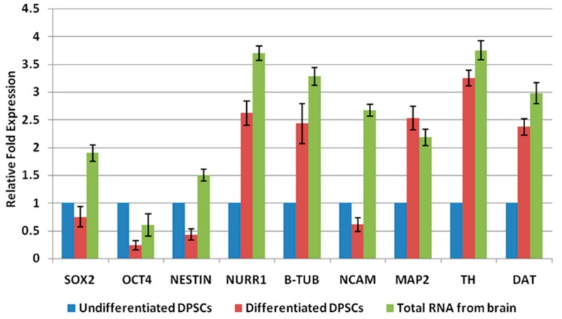 Detection of pluripotent indicators as well as neuronal markers. The Ct value of genes was analysed in the study using SYBR green-based qRT–PCR for DPSCs. Generally, the higher a fold change value, the more copies are present in the specific sample. Total RNA from brain was used as a positive control. Values are presented after normalization to 18s mRNA levels ( p