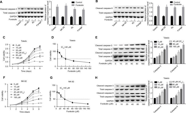 Forskolin promoted the protein expression of cleaved caspase-3/9 and repressed cell growth in NHL cells. Notes: ( A, B ) Toledo, NK-92, RL, and Farage cells were treated with 30 μM of forskolin for 48 hours, then the cells were harvested for Western blotting to assess the expression of total or cleaved caspase-3/9. ( C ) MTT assay was conducted to test the cell growth after Toledo cells were administered 0, 20, 40, 80, or 160 μM of forskolin for 1, 2, 3, 4, 5, or 6 days. ( D ) Toledo cells were administered 0, 20, 40, 80, or 160 μM of forskolin for 48 hours, then MTT assay was used to evaluate the IC 50 of forskolin. ( E ) Toledo cells were incubated with 0, 20, 40, 80, or 160 μM of forskolin for 48 hours, then Western blotting analysis was carried out to detect the expression of total or cleaved caspase-3/9. ( F ) MTT assay was conducted to test the cell growth after NK-92 cells were administered 0, 20, 40, 80, or 160 μM of forskolin for 1, 2, 3, 4, 5, or 6 days. ( G ) NK-92 cells were administered 0, 20, 40, 80, or 160 μM of fors kolin for 48 hours, then MTT assay was used to evaluate the IC 50 of forskolin. ( H ) NK-92 cells were incubated with 0, 20, 40, 80, or 160 μM of forskolin for 48 hours, then Western blotting analysis was carried out to detect the expression of total or cleaved caspase-3/9 (n=3, * P