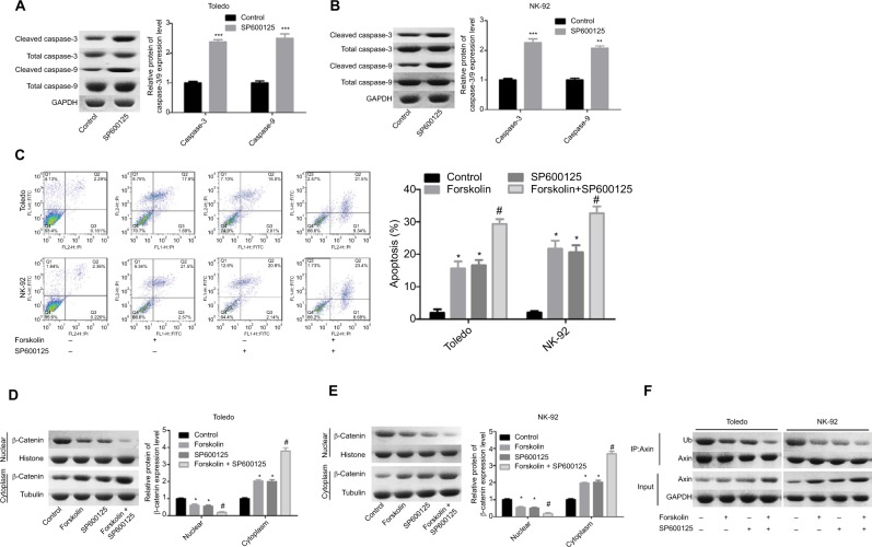 SP600125 enhanced cell apoptosis induced by forskolin in NHL cells. Notes: ( A, B ) The expression of the total or cleaved caspase-3/9 was decided by Western blotting after Toledo or NK-92 cells were treated with SP600125 (20 μM) or not (n=3, ** P