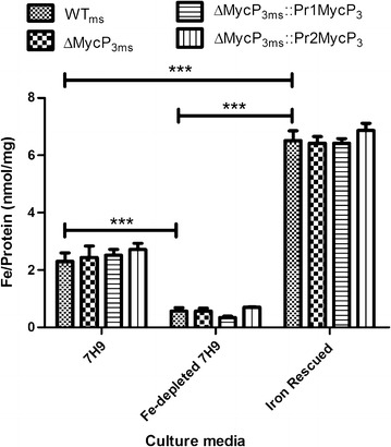 The comparison of the intracellular iron levels in WT ms , ΔMycP3 ms , ΔMycP3 ms ::pr1MycP3 ms and ΔMycP3 ms ::pr2MycP3 ms strains under 7H9, Fe-depleted 7H9 and Fe rescued 7H9 media. The error bars show standard error of the mean (n = 4). The p values obtained using two-way ANOVA statistical analysis between different culturing conditions for all four strains are smaller than 0.0001 ( *** ), an example is shown for the WT ms