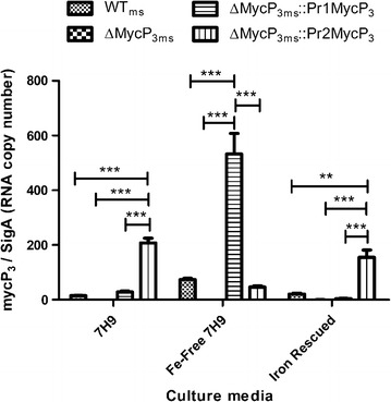 Gene expression analysis of mycP 3 in WT ms , ΔMycP 3ms , ΔMycP 3ms ::Pr1MycP 3 , and ΔMycP 3ms ::Pr2MycP 3 strains under normal 7H9 (iron rich), Fe-free 7H9, and Fe-rescued 7H9 media. The results were normalized against the RNA copy number of sigA . The p values obtained using two-way ANOVA statistical analysis (n = 3) (*p