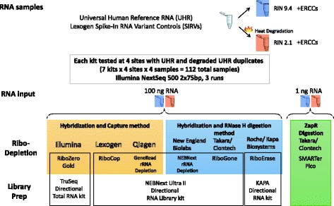 Design of the ribosomal depletion study: Schematic of the sample processing is shown. A single sample of UHR RNA with SIRV spike-ins was kept intact or heat degraded followed by addition of the ERCC spike-in. The two samples were then distributed to the participating sites where they were run as technical duplicates for each kit. All graphics were either produced by the authors or are public domain images that are no longer under copyright