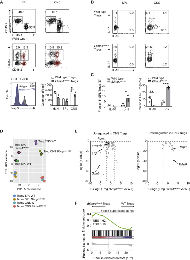 Blimp1 Governs Treg Cell Identity in CNS Treg Cells Mixed bone marrow chimeras (MBMCs) were generated by reconstituting Rag1 −/− hosts with (CD45.1, wild-type) and Blimp1 ΔFoxp3 (CD45.2) bone marrow at a ratio of 1:1. The mixed bone marrow chimeras were immunized with MOG(35-55) in CFA to induce EAE. The mice were analyzed at the peak of EAE. (A) Chimerism between wild-type and Blimp1 ΔFoxp3 cells in the live CD4 + gate of spleen and CNS mononuclear cells and analysis of Foxp3 expression by flow cytometry in control (wild-type) Treg cells and Blimp1 ΔFoxp3 Treg cells isolated from the mixed bone marrow chimeras at the peak of EAE. Data are representative and summarized from three biological replicates. Symbols depict individual mice (bars, mean ± SD). Student's t test ( ∗ p