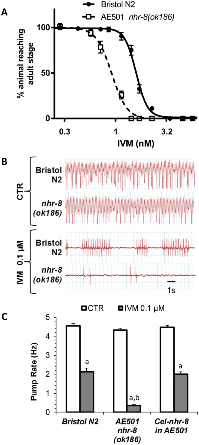 Effects of loss of NHR-8 function on susceptibility of Caenorhabditis elegans to IVM. (A) Dose response curves to IVM in a larval development assay of nhr-8(ok186) in comparison to the wild-type Bristol N2. Values represent the percentage of L1 reaching the young adult stage after 55 hours of incubation at 21°C within the presence of increasing doses of IVM. Data are mean ± SEM from 6 independent experiments. (B) Microfluidic Electropharyngeograms (EPGs) recorded from wild-type N2 Bristol and nhr-8(ok186) with or without IVM exposure. (C) Analysis of pharyngeal pumping activity (pump frequency) showing hypersensitivity of nhr-8(ok186) mutant to IVM and the rescue of IVM sensitivity by C . elegans nhr-8 cDNA. Pump frequency was compared in worms exposed to control or 0.1 μM IVM using the Nemametrix ScreenChip system. EPG recordings (2–4 min per worm) were started 20 min after the onset of IVM exposure. Data are reported as the mean ± SEM; n = 30–90 worms/group. a p