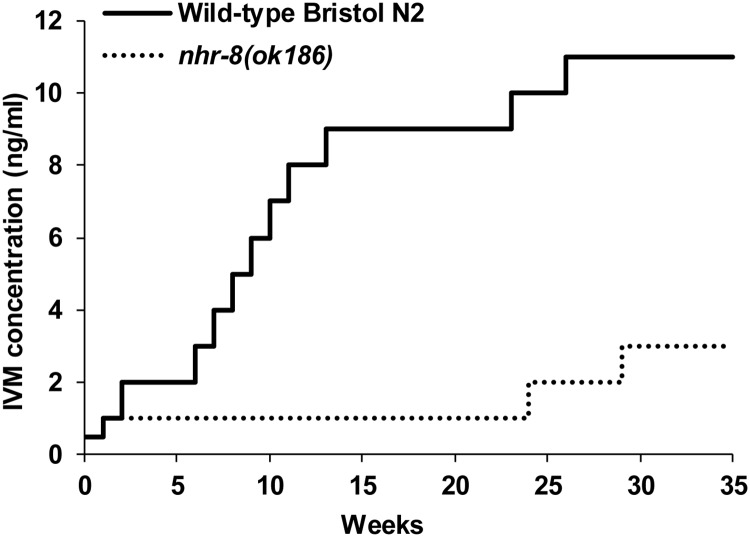 Time course of stepwise selection of IVM tolerance in wild-type and nhr-8 -deficient C . elegans strains. Comparison between the development kinetics of acquired resistance to IVM in wild-type N2 Bristol (solid line) and nhr-8 - (ok186) (dashed line) C . elegans strains following stepwise exposure to IVM. Worms, cultured on Nematode Growth Medium plates containing IVM, were transferred to NGM plates containing higher doses of MLs when able to survive and reproduce. The period of 35 weeks corresponds approximately to 60 generations for each strain. Data representative of three separate experiments.