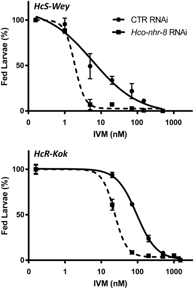 Impact of Hco-nhr-8 silencing on IVM efficacy against susceptible (HcS-Wey) and resistant (HcR-Kok) H . contortus isolates. Larval feeding inhibition assay was performed by treating L2 larvae with increasing concentration of IVM, with or without silencing of Hco-nhr-8 through RNAi technique using whether double stranded RNA specifically targeting Hco-nhr-8 or non-target ( gfp ) siRNA as a control. The LFI 50 estimates the concentration of IVM at which 50% of the L2 did not feed. Data are mean ± SEM from 3 independent experiments.