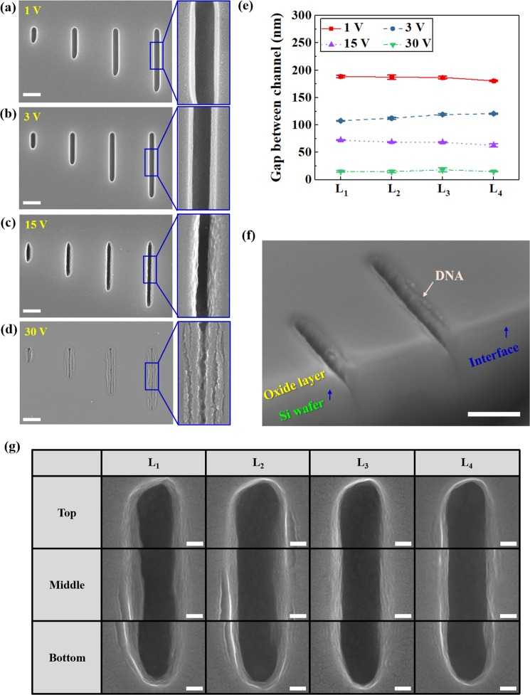 ( a – d ) SEM images of lambda DNAs attached by electrophoresis for 15 min at different electric potentials; 1, 3, 15, and 30 V, respectively. The scale bar is 500 nm. ( e ) Gaps inside nanochannel. ( f ) SEM image of nanochannels with interface showing lambda DNAs attached by electrophoresis at 15 V for 15 min (scale bar =500 nm). ( g ) Ultra high-resolution FE-SEM images of linearly aligned DNAs attachment in nanochannels L 1 , L 2 , L 3 , and L 4 at 15 V for 15 min. All scale bar are 50 nm.