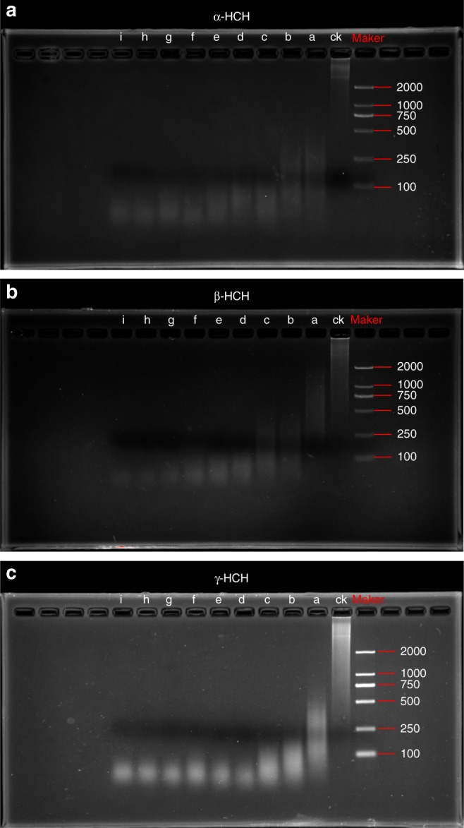 Gel electrophoresis of DNA fragments. a α-HCH, b β-HCH, and c γ-HCH (0–4.0 mg L −1 ). a, b, c, d, e, f, g, h, and i represent hexachlorocyclohexane (HCH) concentrations of 0, 0.5, 1.0, 1.5, 2.0, 2.5, 3.0, 3.5, and 4.0 mg L −1 , respectively. Ck, control treatment without DNase I