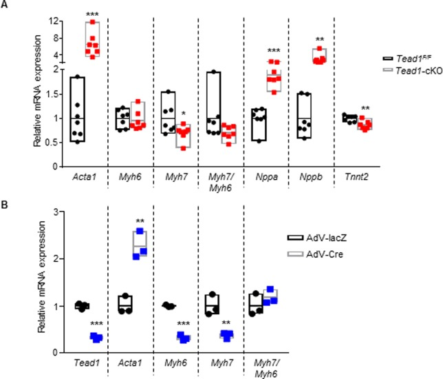 Tead1 deletion in perinatal cardiomyocytes leads to elevated markers of heart failure. Data are presented as mean ± s.e.m. *** p
